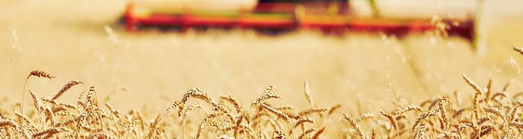Pause fra høsten? Se 4 gode forslag her